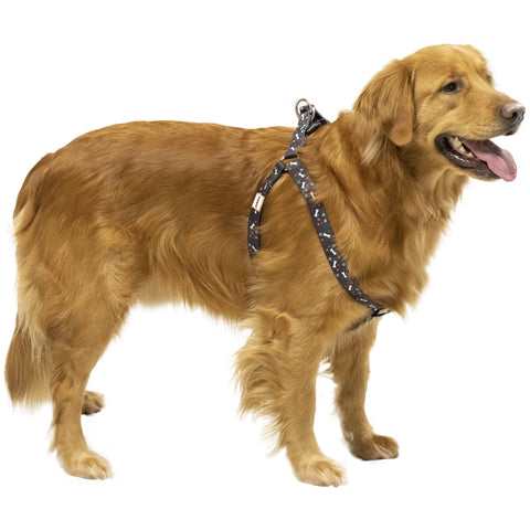 Black Nylon Pet Harness on golden retriever
