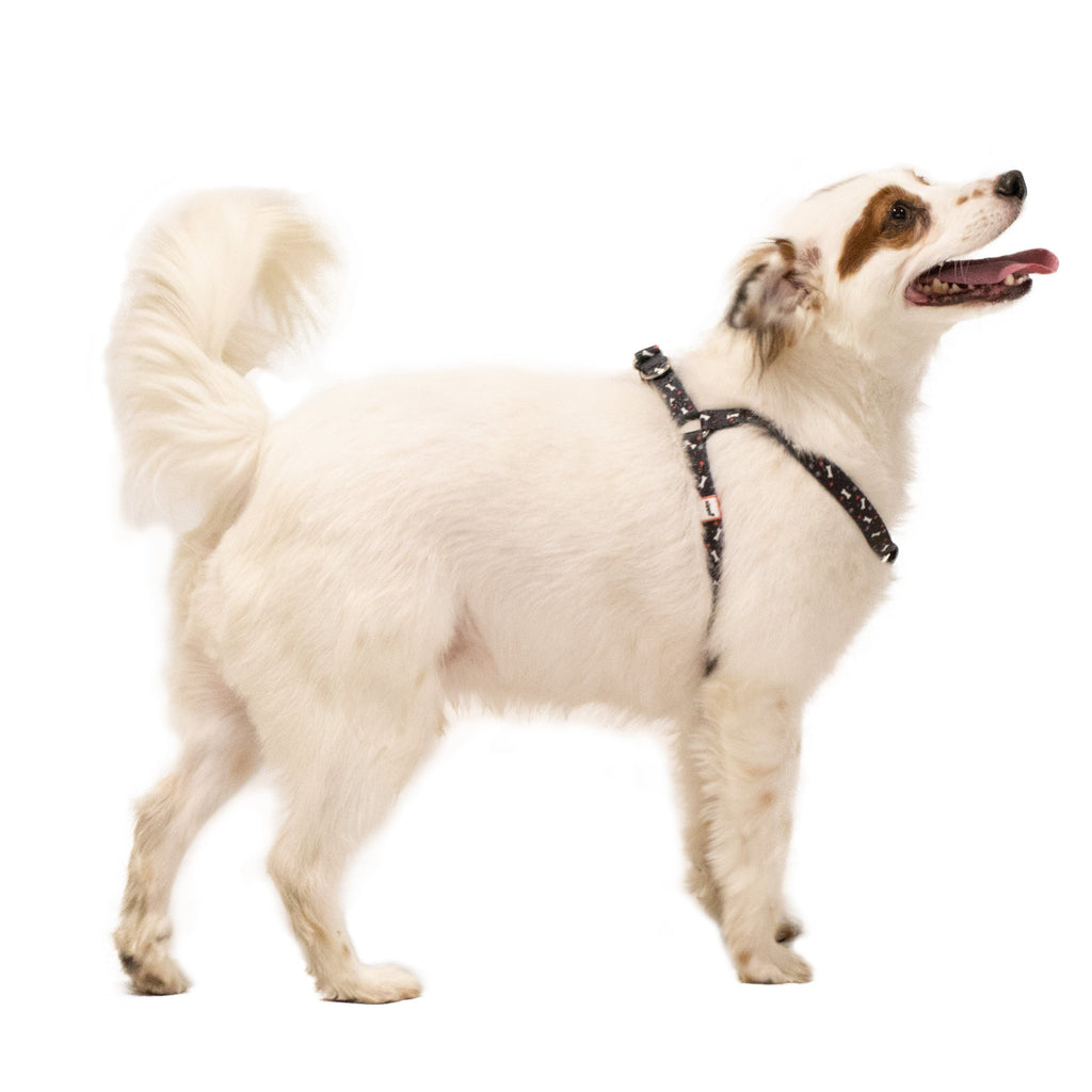 Black Nylon Pet Harness on a small dog