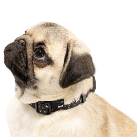 Black Nylon Pet Collar on a pug