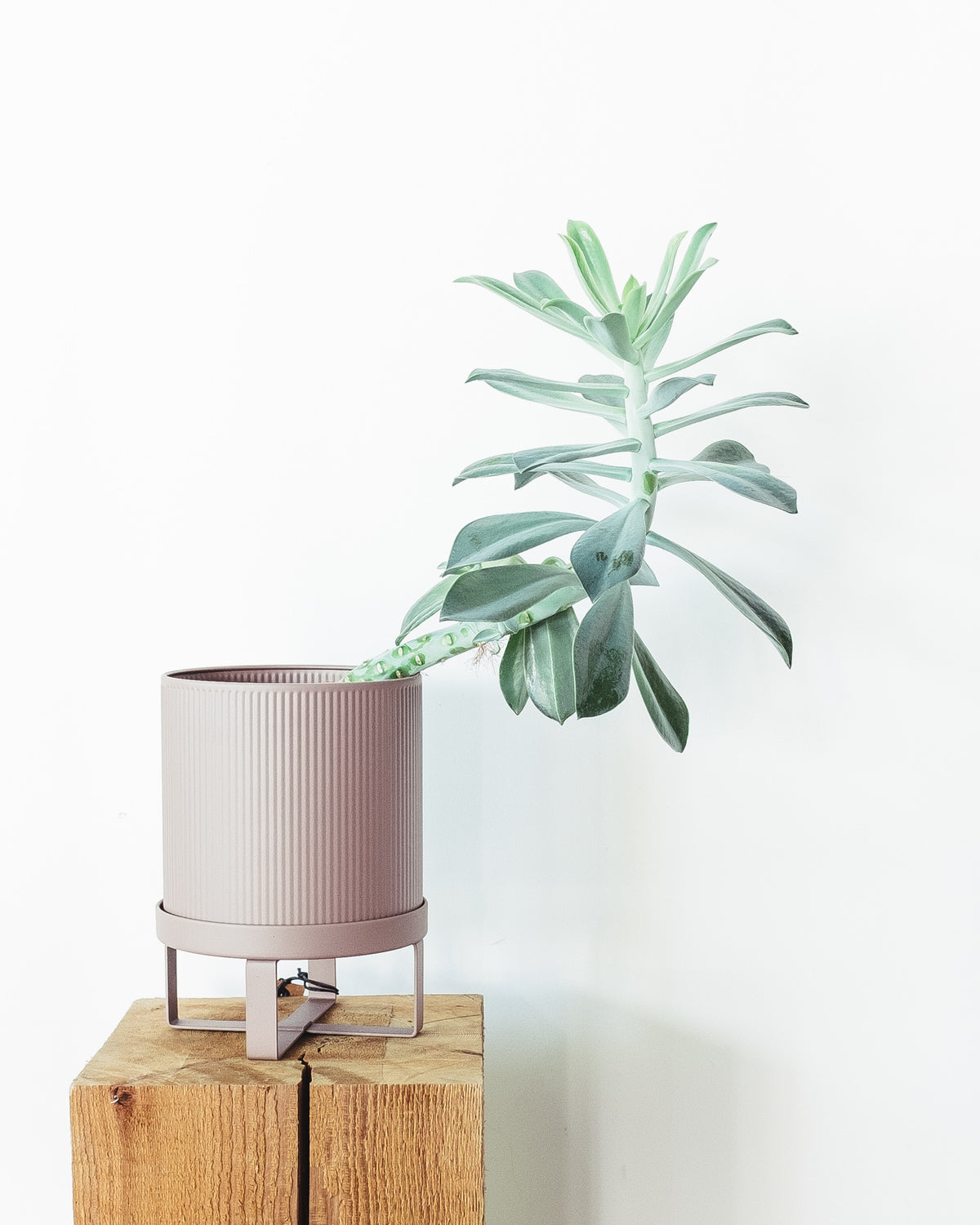 STEEL BAU PLANTER - DUSTY ROSE