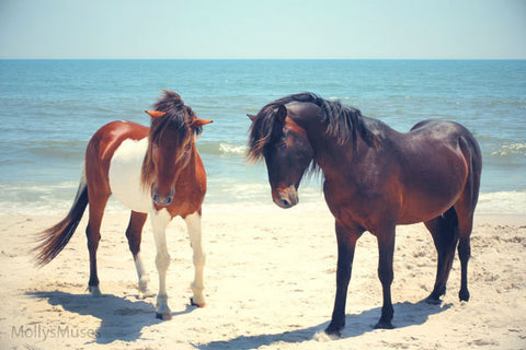 Assateague Ponies Photograph -  Beach House Decor