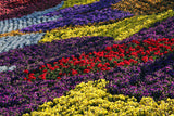 Flower Landscape Photography - Abstract Garden Art