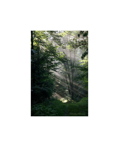 Forest Photograph - Enchanted Woodland Tree Photo