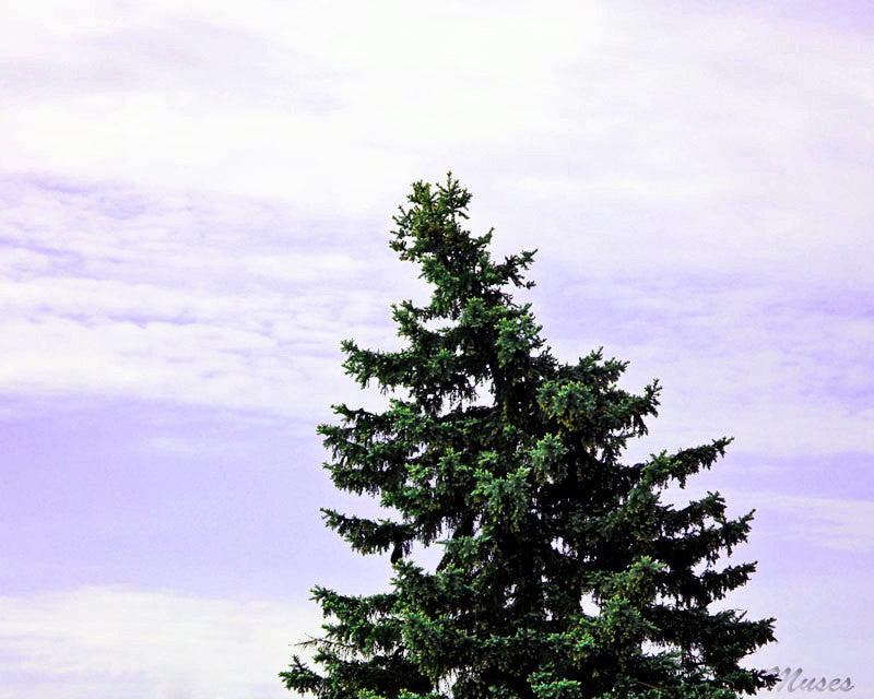 Pine Tree Art Photography - Surreal Nature - Emerald Lavender