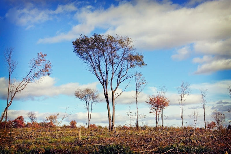 Blue Sky Landscape Photography with Trees - Earthy Home Decor