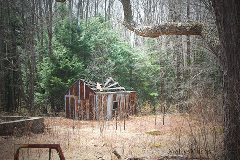 Haunted Shanty Pump House Photograph -  Woodland Home Decor