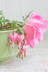 Rose with Bleeding Hearts Floral Still Life Photo - Pink Green Decor
