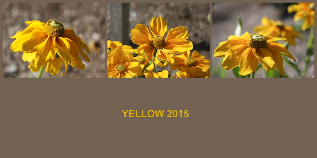 Yellow Button Flower Photograph Print Collection -Country Home Decor