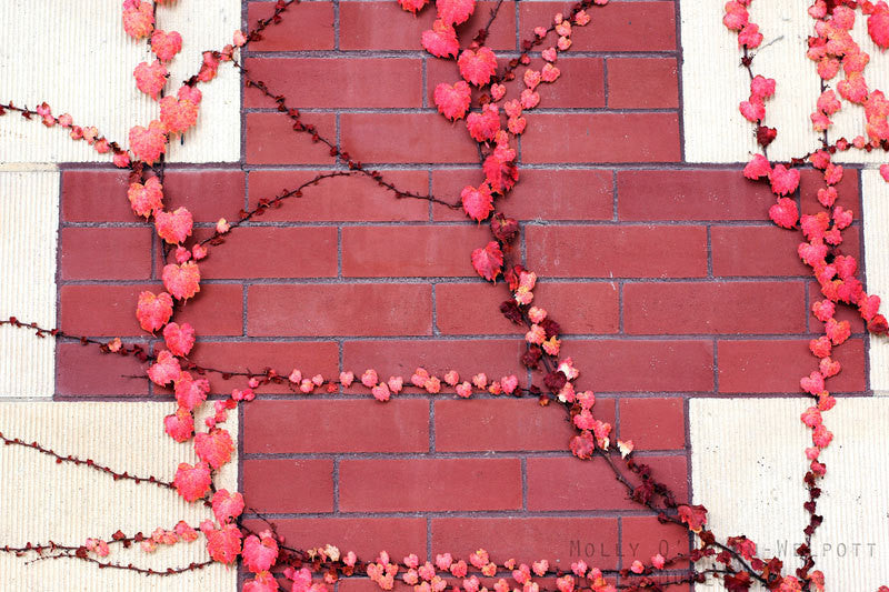Modern Red Cross Art Photo - Rambling Vines - Red Hearts