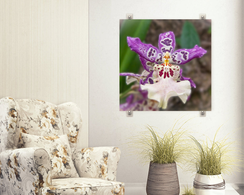 Purple Orchid Photo - Orchid Flower Photograph - Bold Home Decor