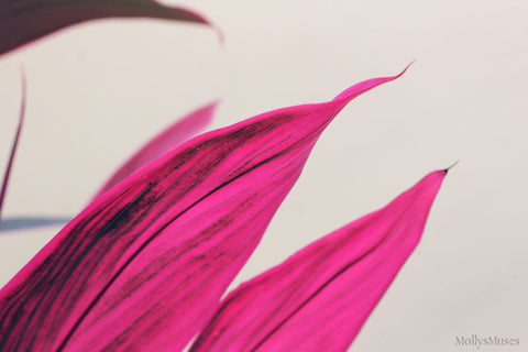 Hot Pink Wall Decor - Cordyline Flower Art Photograph - Tropical Botanical