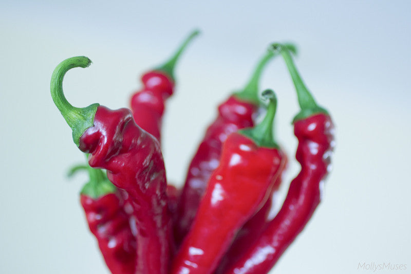 Cayenne Pepper Photography - Red Hot Kitchen Wall Art Decor