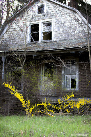 Surreal Photography - Abandoned House - Yellow Forsythia - Ethereal