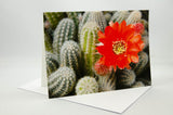 A photo greeting card of a cactus plant with orange flowers.