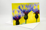 Greeting Card - Blue Bachelor's Buttons flowers with a yellow background. The background is out-of-focus ground cover called Creeping Jenny.