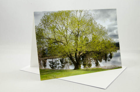 Spring Tree - Pinhey's Point, Ontario - Greeting Card