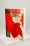 Greeting Card - Maple Leaf Display.