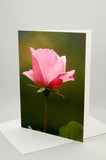 A photo greeting card. Pink rose.