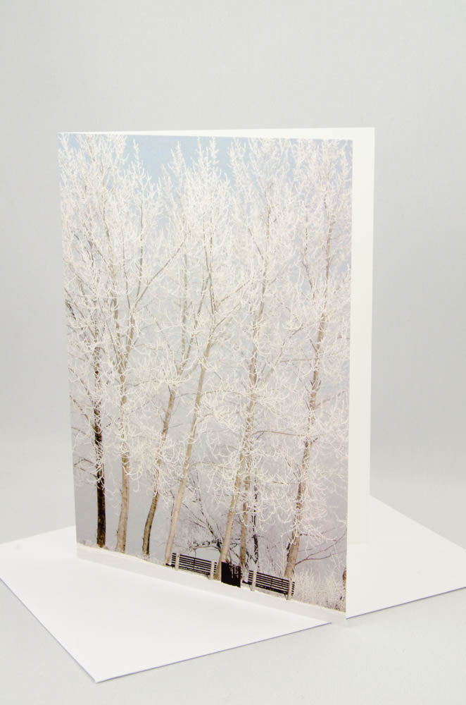 A photo greeting card of benches and trees covered in hoarfrost.