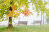Riverside Benches in the Mist - Greeting Card.