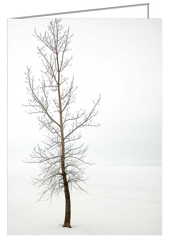 A photo greeting from a photography of a lone tree in winter along the Ottawa River.