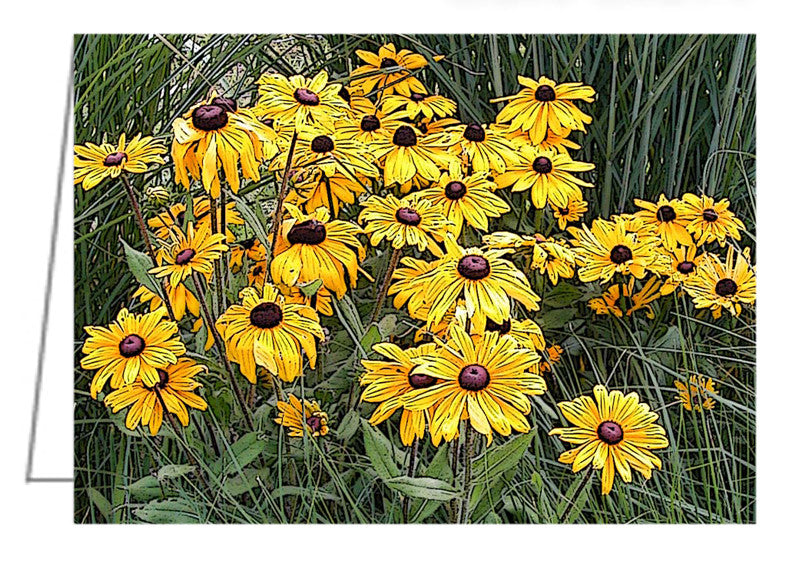 Greeting Card - Black-Eyed Susans in the Grass