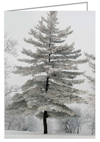 A photo greeting card of a pine tree covered in hoarfrost.
