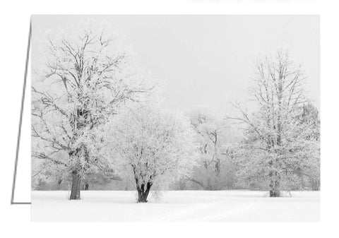 A photo greeting card of trees covered in hoar frost.