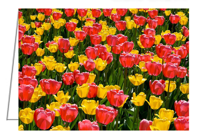 A photo greeting card of pink and yellow tulips.