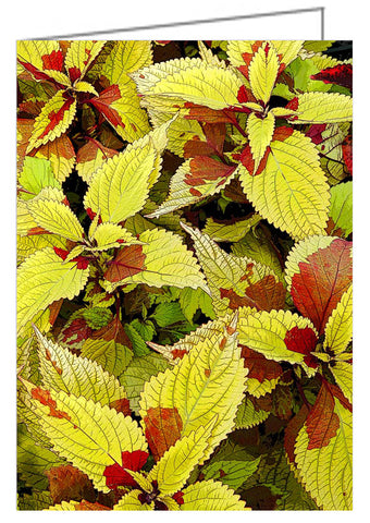 Greeting Card - close-up of coleus leaves.