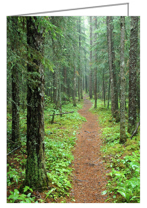 Greeting Card - Pukaskwa Hiking Trail. Photograph - Hike to the White River Suspension Bridge. Pukaskwa National Park near Marathon, Ontario, Canada.
