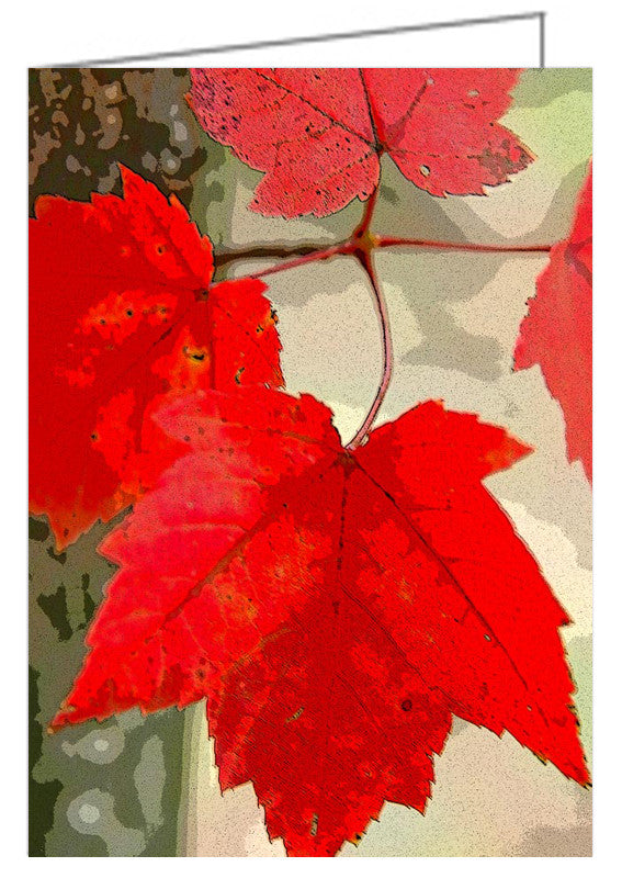 Maple Leaf Display - Greeting Card