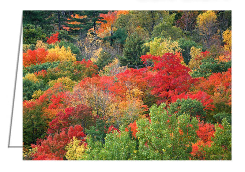 Greeting Card - an elevated view from one of the lookouts in Gatineau Park showing the autumn colours of the trees.
