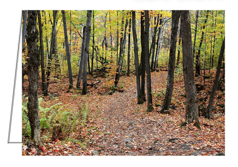 Greeting Card - Hiking Trail in Autumn, Gatineau Park, Quebec.