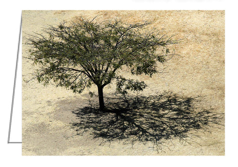 Greeting Card - Aerial view of a tree and its shadow at Monte Albán in Mexico.