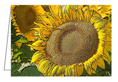 Sunflower along Hwy 14 east of Pierre, South Dakota.
