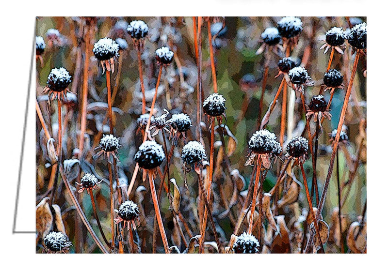 Greeting Card. First snowfall settles on the dried seed heads of Rudbeckia (Brown-eyed Susan) plants.