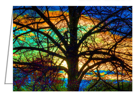Greeting Card - Tree in the Arboretum backlit by the sunset with colours enhanced to reveal a stained glass quality to the image.