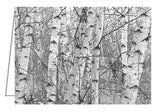 A photo greeting card of birch trees.