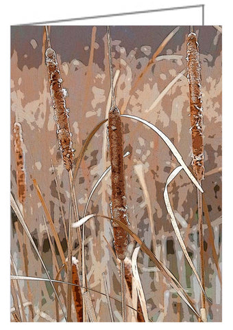 A photo greeting card. Cattails, or bullrushes, in the late fall.
