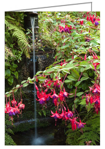 Greeting Card - Fuchsias at a Well, Tregathenan, Cornwall, UK.