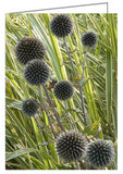 Greeting Card - floral image showing thistle seed heads.