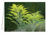 Greeting Card - A garden containing golden rod beside a green hedgerow.