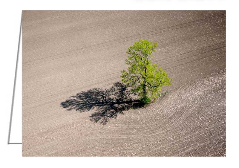 Greeting Card - Aerial abstract of a single tree casting a long shadow in a barren corn field in spring.