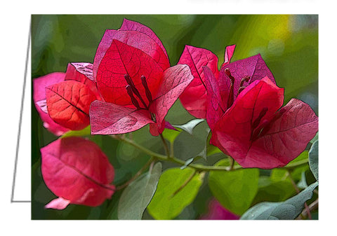 Bougainvillea at Casa Candiles, Ixtapa, Mexico - Greeting Card.