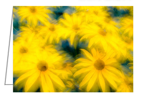 A photo greeting card. These black-eyed susans, otherwise known as Rudbeckia, were growing in our garden.
