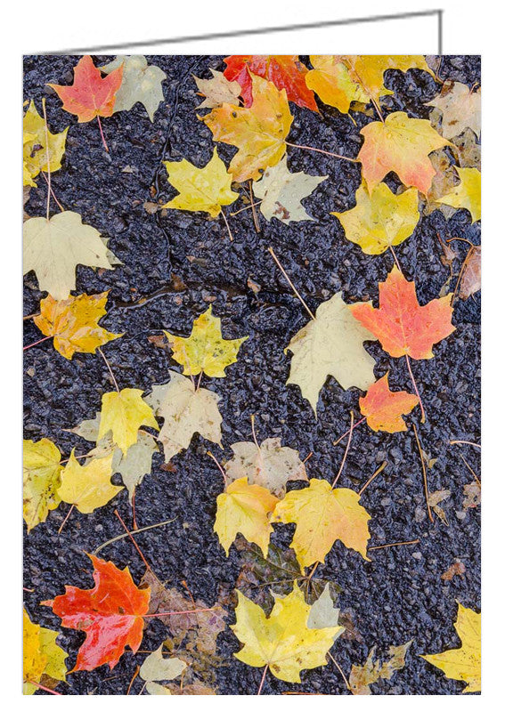 A photo greeting card - Fallen leaves on wet pavement. Autumn in my neighbourhood.