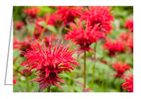 A photo greeting card. Red Monarda or Bee Balm