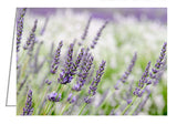 A photo greeting card. Lavender at Prince Edward County Lavender Farm near Hillier, Ontario.