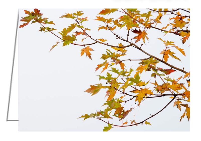 A photo greeting card - Tree branch with colourful leaves in autumn, White background.